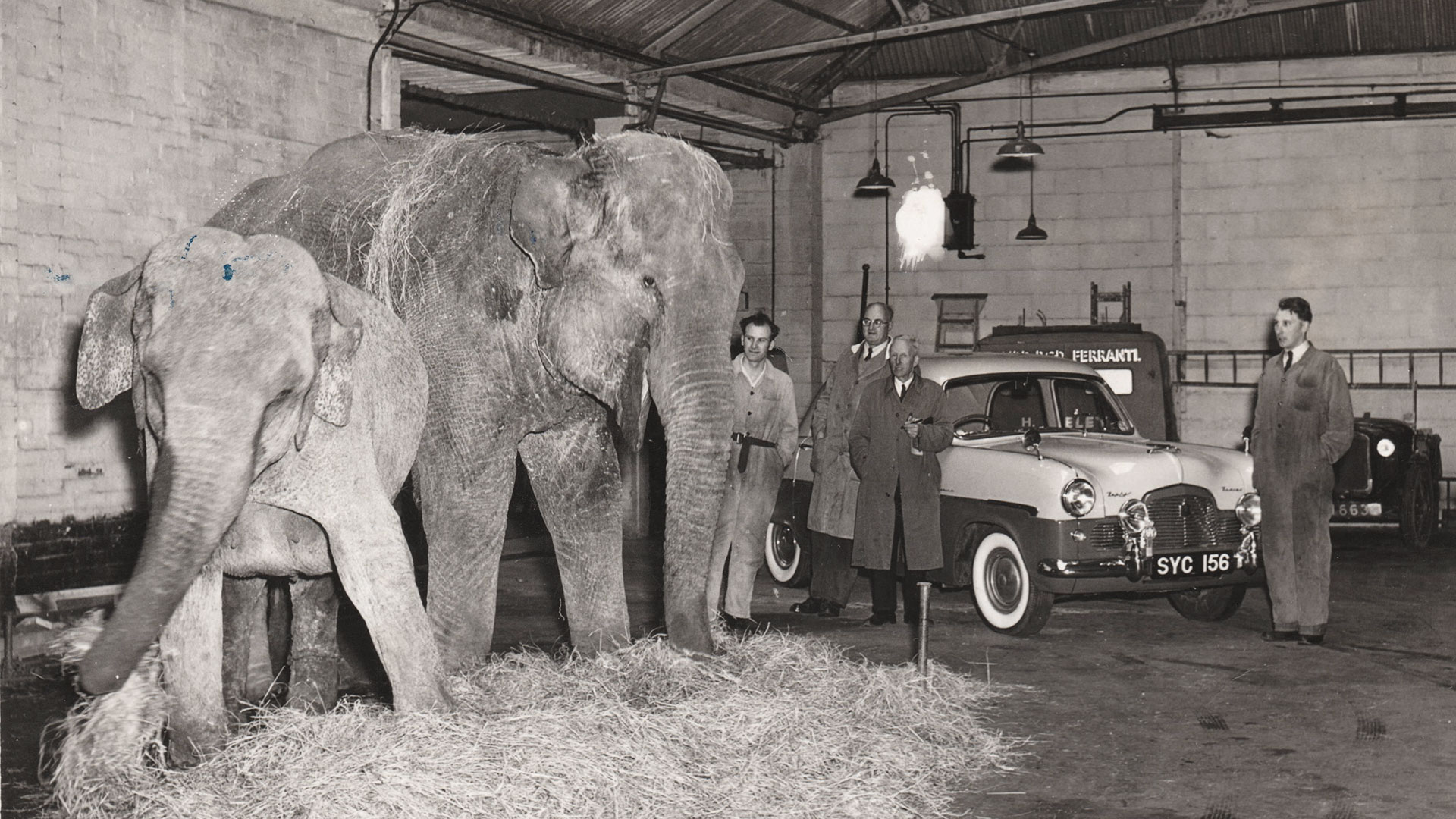 Circus Elephants housed at Willcocks Engineering